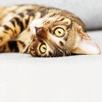 Schattige kleine kat gezicht close-up liggend op zachte grijze bed thuis