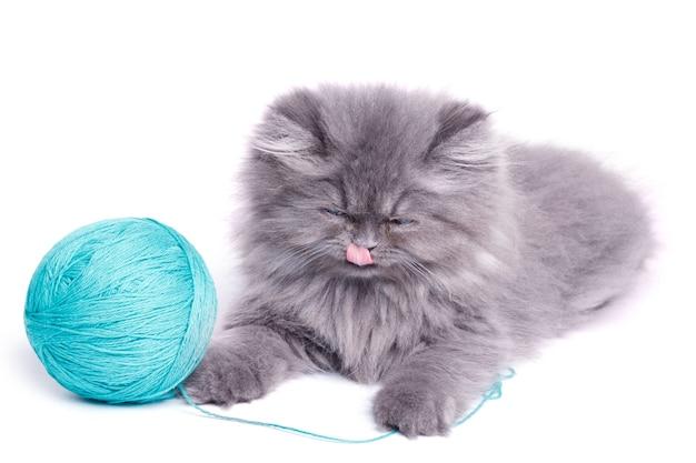 Schattige kleine kitten en bol garen