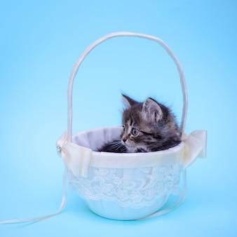 Schattige kleine kitten in een witte mand