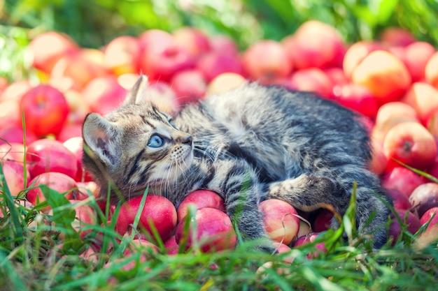 Schattige kleine kitten ontspannen op rode appels in de tuin