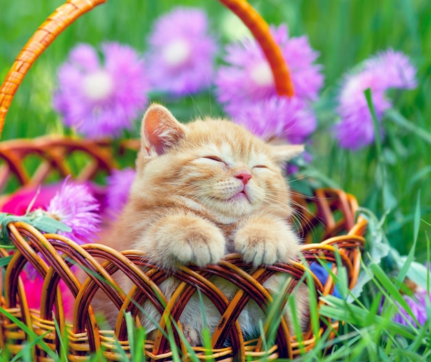 Schattige kleine kitten slapen in een mand op het bloemengazon