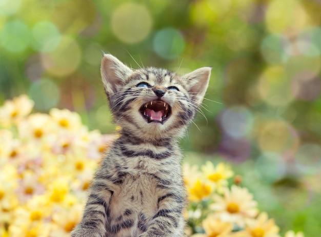 Schattige kleine miauwende kitten in de tuin