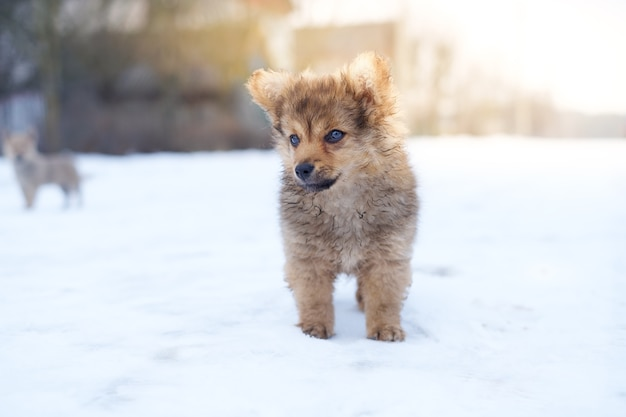 Schattige kleine puppy in de sneeuw, jonge pluizige hond