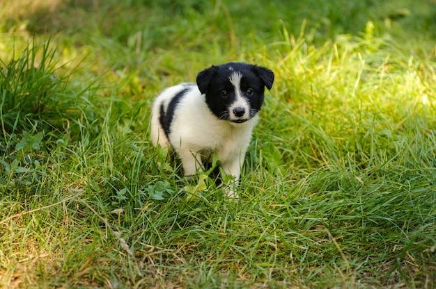 Schattige kleine puppy lopen op het groene gras