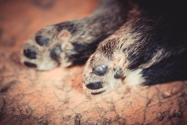 Schattige kleine puppy poot op bruine achtergrond close-up, macro filter