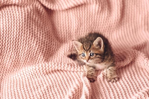 Schattige kleine rode kitten slaapt op bont witte deken