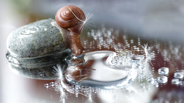 Schattige kleine slak met paardebloemzaad op zijn schaal zit op een grote kiezelsteen en kijkt in de waterspiegel