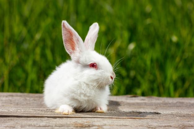 Schattige kleine witte konijn op een groene achtergrond, zit op een houten bord