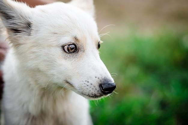 Schattige kleine witte puppy
