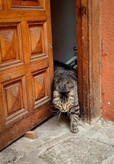 Schattige kleurrijke kat die het huis uit komt