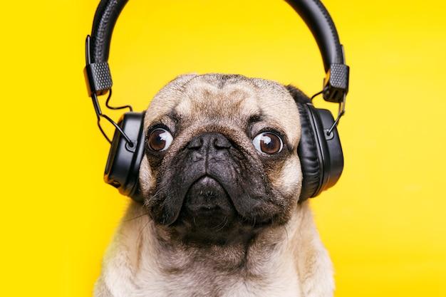 Schattige lachende hond luisteren naar muziek in de koptelefoon.