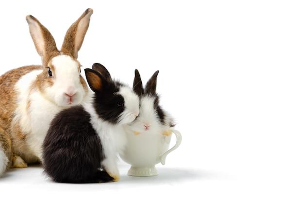 Schattige moeder met twee babykonijnen op wit wordt geïsoleerd