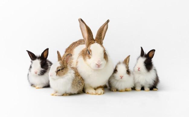 Schattige moeder met vier babykonijnen portraiton geïsoleerd op een witte achtergrond.