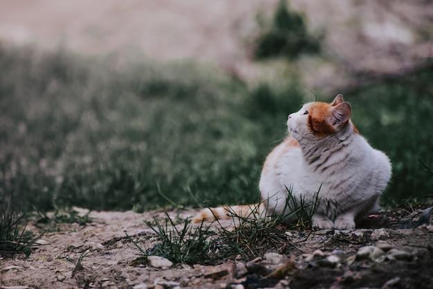 Schattige mollige kat zit in het midden van een met gras bedekt veld