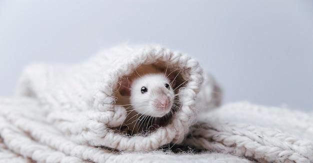 Schattige muis in een trui
