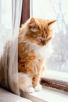 Schattige oranje kat in de buurt van venster