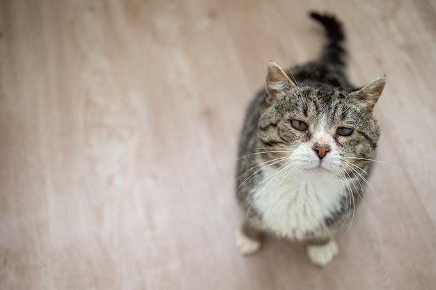 Schattige oude kat die thuis op de vloer rust