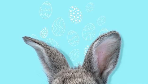 Schattige paashaas geïsoleerd op blauwe studio achtergrond, flyer voor uw advertentie. leuke oren van verborgen dier met beschilderde eieren. wenskaart. concept van vakantie, lente, vieren. modern ontwerp.