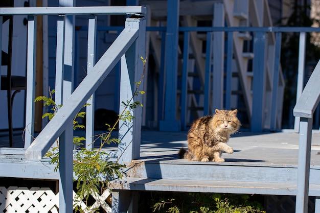 Schattige pluizige kleurrijke kat op de veranda