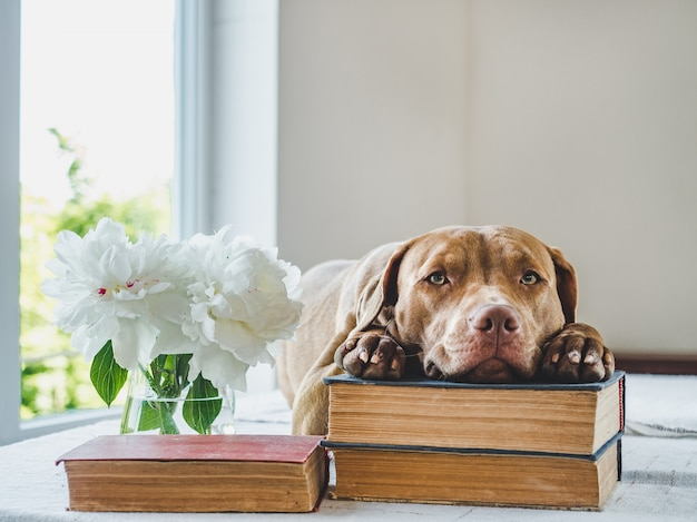 Schattige puppy en vintage boeken. studio foto