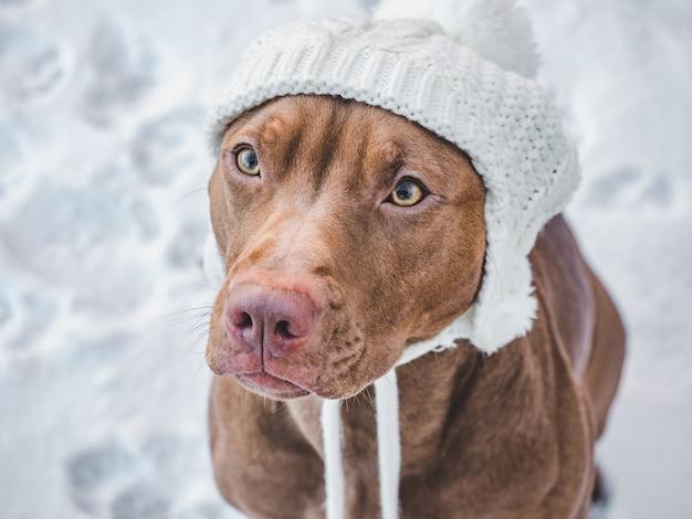 Schattige puppy in de sneeuw