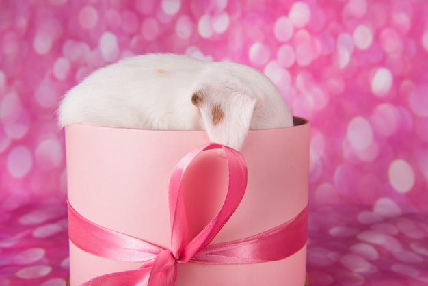 Schattige puppy in een roze geschenkdoos, gefeliciteerd met je verjaardag
