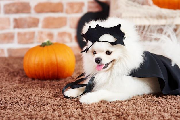 Schattige puppy in halloween kostuum