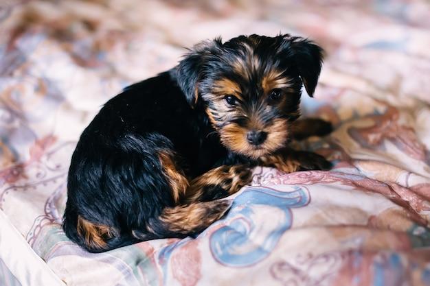 Schattige puppy ligt op bed