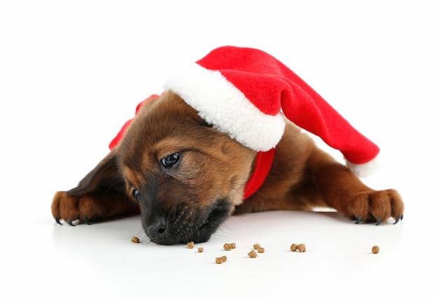 Schattige puppy met kerstmuts geïsoleerd