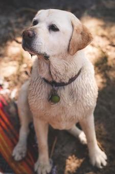 Schattige puppy met zijn oren naar beneden