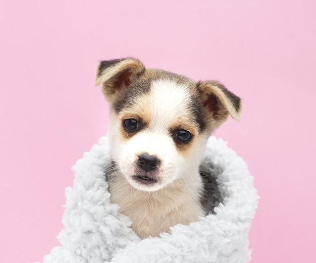 Schattige puppy op een roze achtergrond