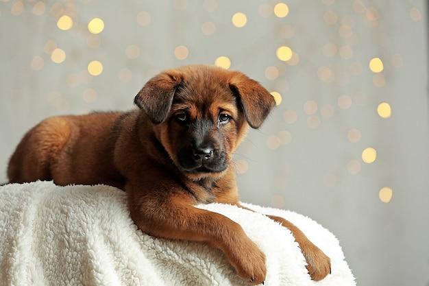 Schattige puppy op kerstverlichting achtergrond Premium Foto