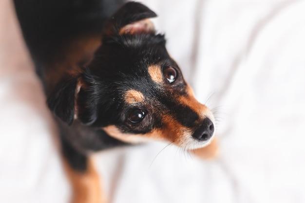 Schattige puppy op zoek naar jou. bovenaanzicht
