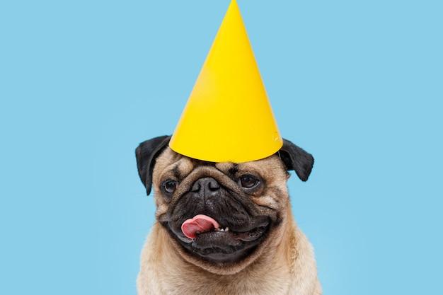 Schattige puppy van het mopshondras met feestmuts op hoofd lachende hond