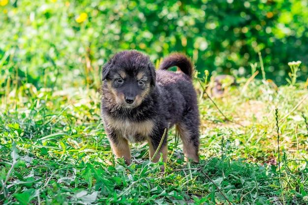 Schattige puppy zittend in de tuin