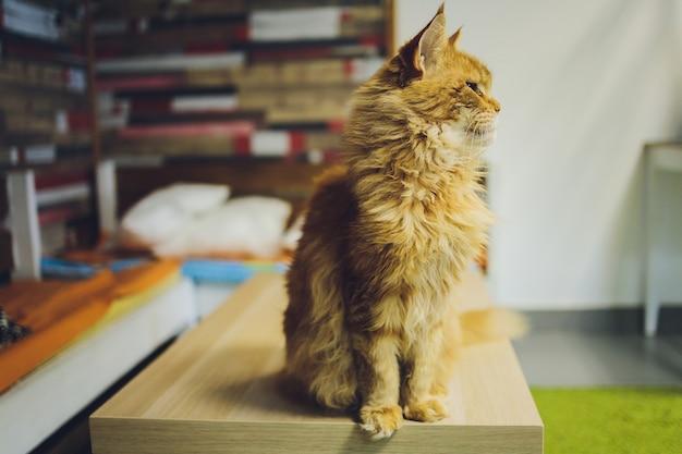Schattige rode kat met een snuit defect en schuine ogen kijkt in het frame van dichtbij met een wazige achtergrond.