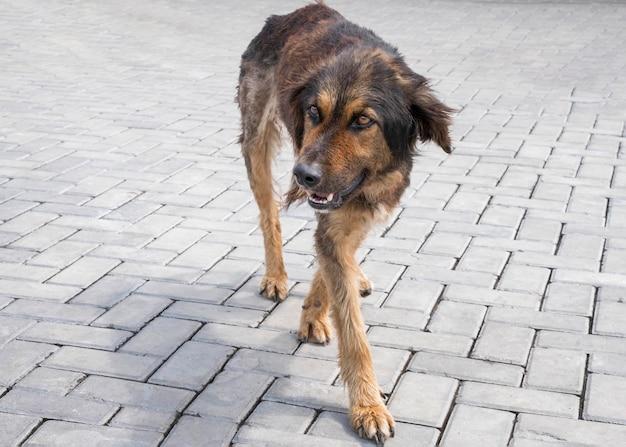 Schattige verlaten hond die wacht om door iemand te worden geadopteerd
