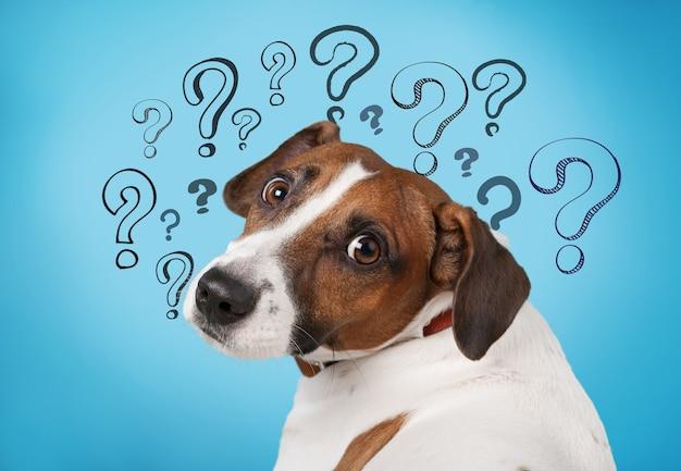 Schattige verwarde kleine hond met vraagtekens