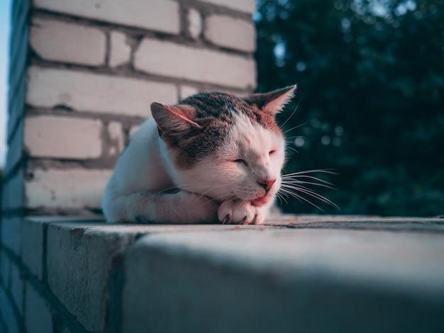 Schattige witte en bruine harige kat slaapt