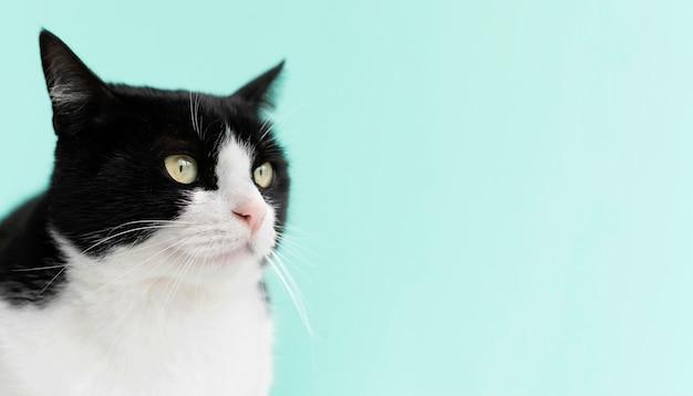 Schattige witte en zwarte kat met zwart-wit muur achter haar