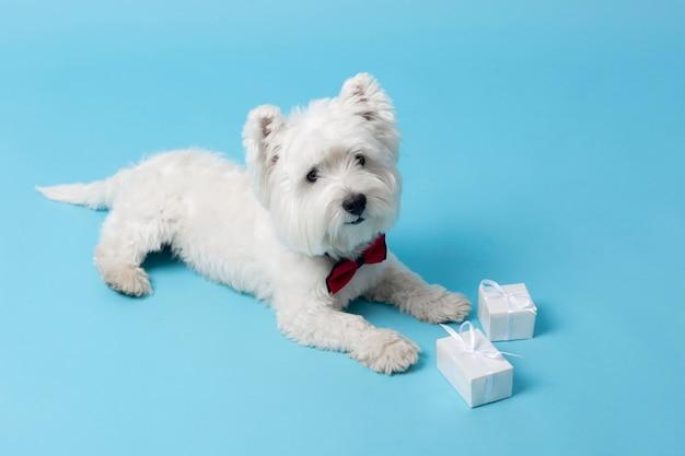 Schattige witte hond geïsoleerd op blue