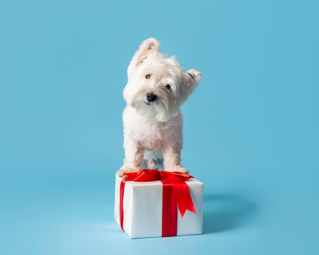 Schattige witte hond met cadeau