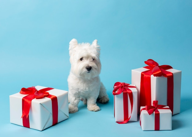 Schattige witte hond met cadeaus