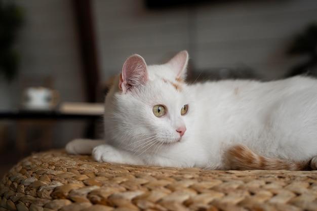 Schattige witte kat die binnenshuis legt