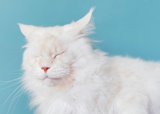 Schattige witte kat met zwart-wit muur achter haar