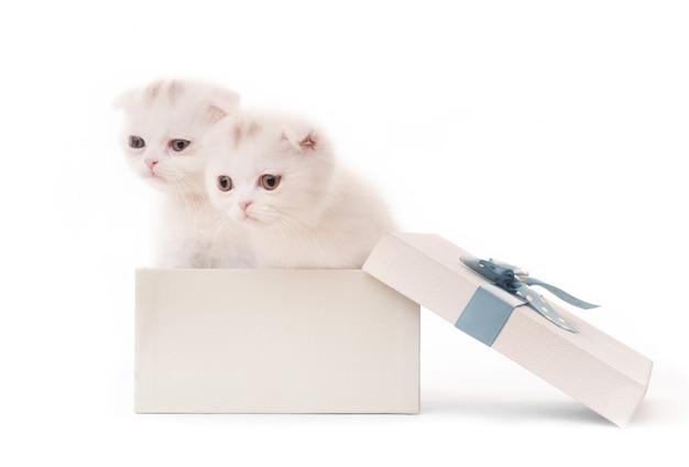 Schattige witte kittens in geschenkdoos geïsoleerd op witte achtergrond