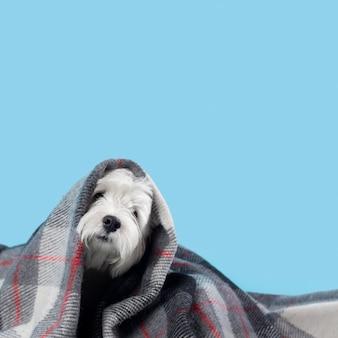Schattige witte kleine puppy