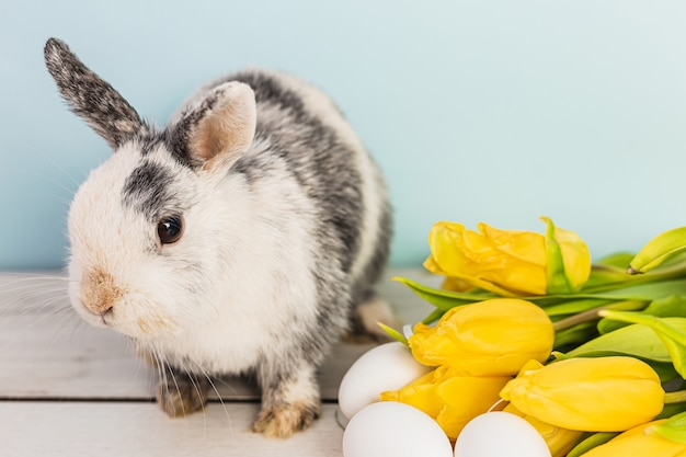 Schattige zwart-wit bunny naast paaseieren en gele verse tulpen op een houten tafel met blauwe achtergrond
