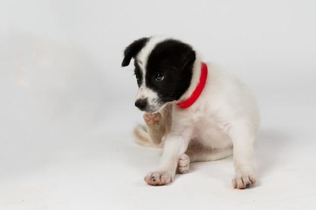 Schattige zwart-witte hond van gemengd ras
