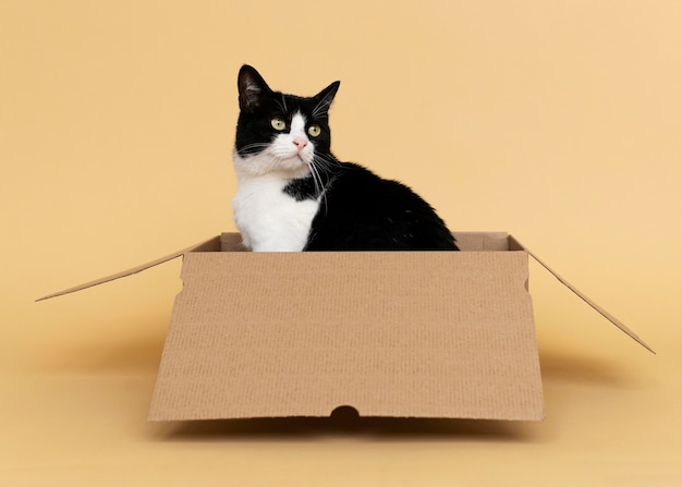 Schattige zwart-witte kat met zwart-wit muur achter haar